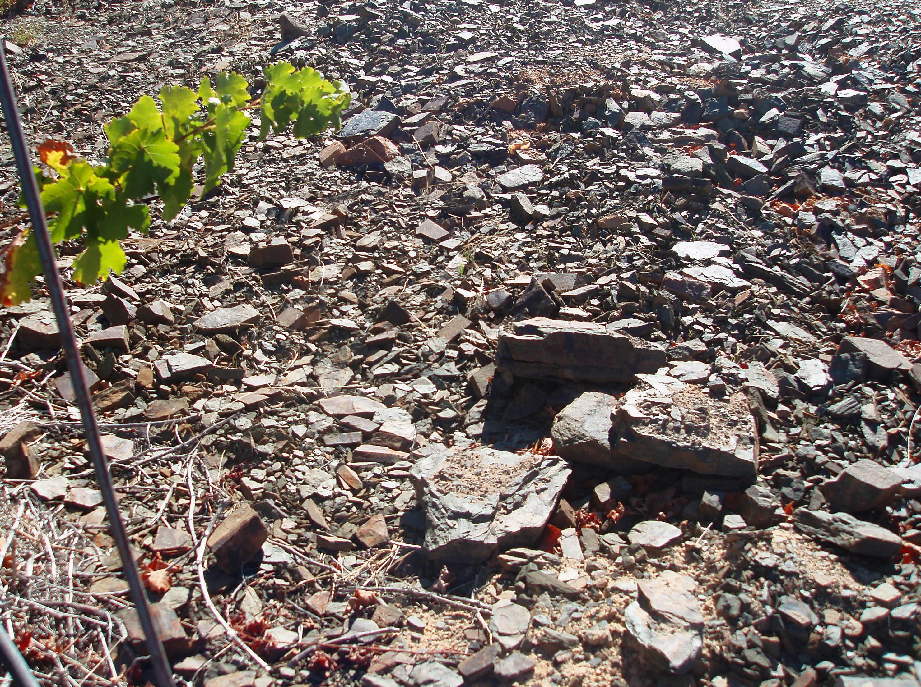 Part 2 vineyard geology soils for sommeliers articles for Soil articles