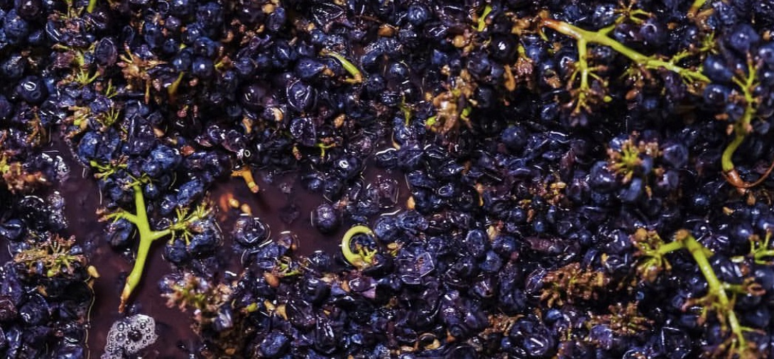 Image result for what is whole bunch fermentation looks like