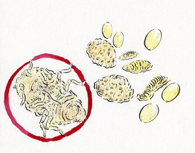 The Devastator: Phylloxera Vastatrix & The Remaking of the World of Wine