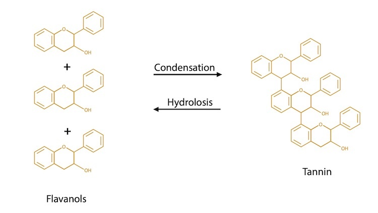 Hydrolysis and Condensation