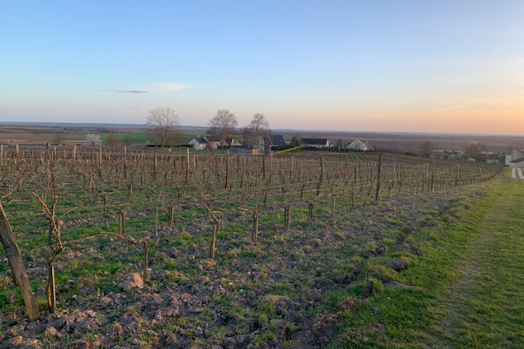 The Brézé vineyard
