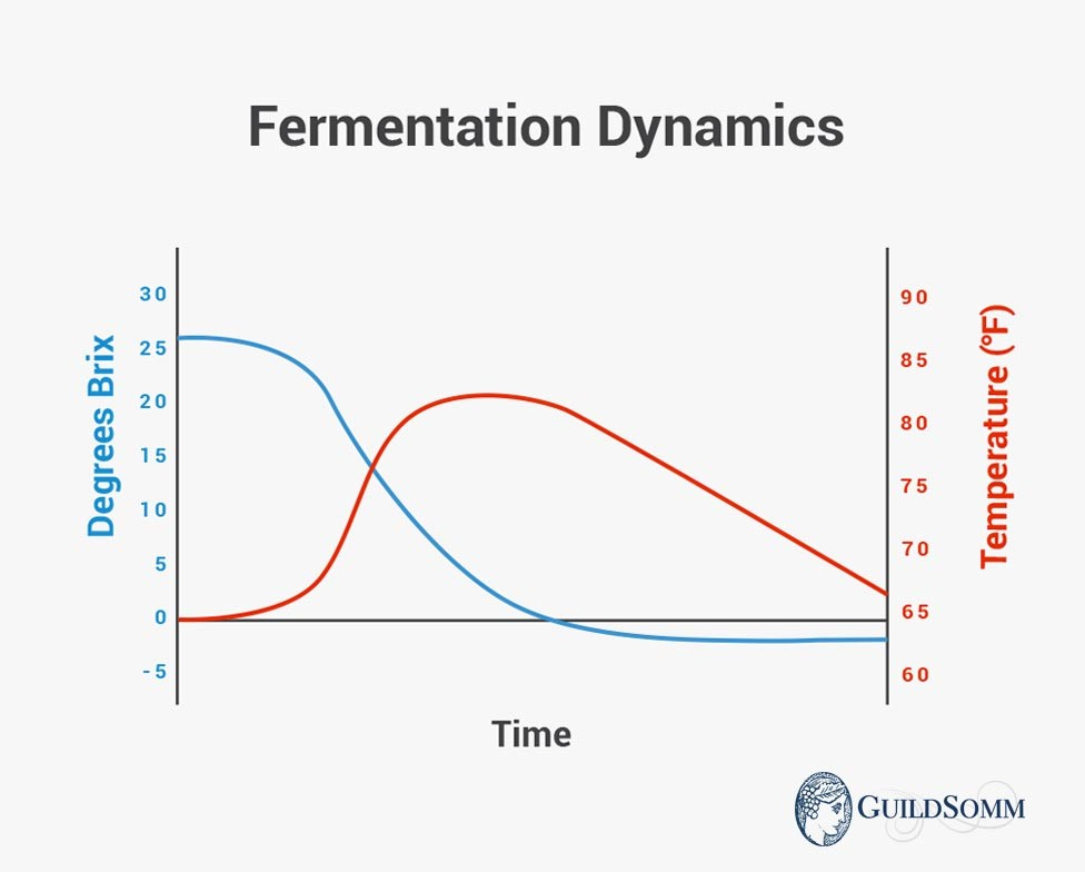 A typical Brix and temperature chart for a healthy fermentation. This type of chart is used to follow the progress of fermentation.
